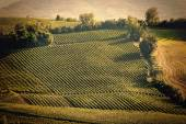 Vintage view hills of Tuscany with vineyard — Stock Photo