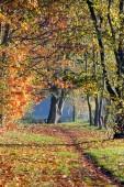 Autumn landscape — Стоковое фото
