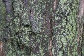 Mossy bark — Stock Photo