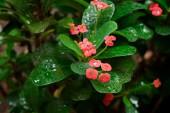 Tropical shrubbery in the rain — Stock Photo