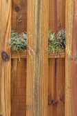 Two air plants growing on wooden fence — Stock Photo