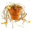 Dead plant in a pot over white — Stock Photo #67256263