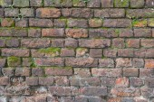 Moss covered old brick wall — Foto Stock