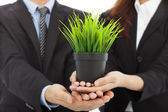 Hands of business people holding green sapling. — Stock Photo