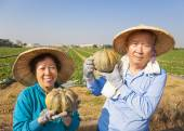 Happy senior couple standing  in front of farmland — 图库照片