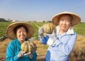 Happy senior couple standing  in front of farmland — Stock fotografie