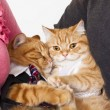 Two cats in love with owners — Stock Photo #65843261