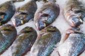 Gilthead (Sparus aurata) on ice in fish market — Stock Photo