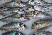 Gilthead (Sparus aurata) on ice in fish market — Stock Photo