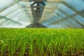Organico serra — Foto Stock