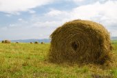Hay harvesting — Stock Photo