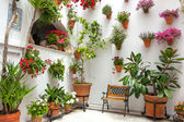 Spring Flowers Decoration of Old House, Cordoba, Spain, Europe — Stock Photo