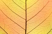 Background of Autumn colors Leaf cell structure - natural textur — Stock Photo