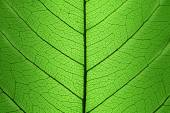 Background of Green Leaf cell structure - natural texture — Stock Photo