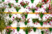 Blomma dekoration av väggen - gammal europeisk stad, cordoba, spa — Stockfoto