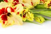Fresh colorful gladiolus isolated - horizontal — Stock Photo