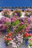 Mediterranean Wall and Window decorated Colorful Flowers , Cordo — Stock Photo