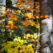 Colorful Leaves with sunbeams in Autumn Forest — Stock Photo #56069963