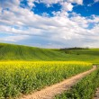 Colorful Valle - Yellow flowering fields and ground road overloo — Stock Photo #83467602