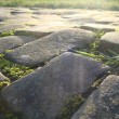 Old cobble stone road with moss grass and evening low sun  — Stock Photo #63148955
