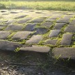 Old cobble stone road with moss grass and evening low sun — Stock Photo #63148993