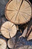 Woodpile. — Stock Photo