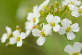The white flowers macro shot — Stock Photo