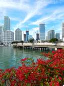 Colorful flowers Biscayne bay skyline photo — Stock Photo