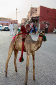 Camel toy with broken head on the open market in Marakesh — Stock Photo