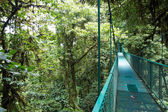 Suspended bridge above the forest — Stock Photo