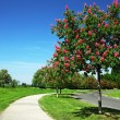 Red chestnut alley — Stock Photo #73904067