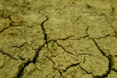 Dry cracked earth background — Stock Photo