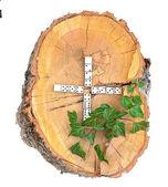 Alphabet en bois rustique — Photo