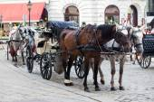 Traditional horse-driven carriage — Stock Photo
