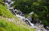 Forest stream surrounded by vegetation running over rocks — Stock Photo