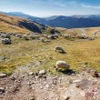 Flock of sheeps eating grass on top of the mountain in Romania — Stock Photo #74719413