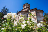 White roses flowers in front of Cozia monastery church on a sunn — Stock Photo