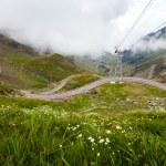 Transfagarasan mountain road with wild flowers from Romania — Stock Photo #77194313