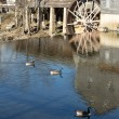 Water mill with canada geese — Stock Photo #75468289