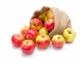 Ripe apples in burlap sack — Stock Photo