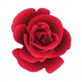 Единственный цветок повысился. — Cтоковый вектор