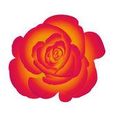 Single flower rose. — ストックベクタ