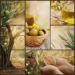 Olives collage — Stock Photo #52108381