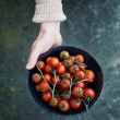 Fresh tomatoes — Stock Photo #52515287