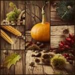 Autumn collage — Stock Photo #54452545