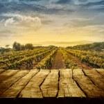 Vineyard design — Stock Photo #66220525