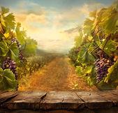 Vineyard design — Stock Photo