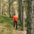 Man Having a Walk in the Forest — Stock Photo #52746413