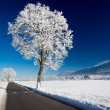 Winter landscape at a sunny day. Allgau, Germany — Stock Photo #62098983