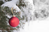 Red Christmas ornament on snowy tree — Stock Photo